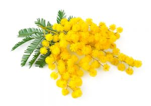 marche appartamenti mimosa agriturismo valle del metauro