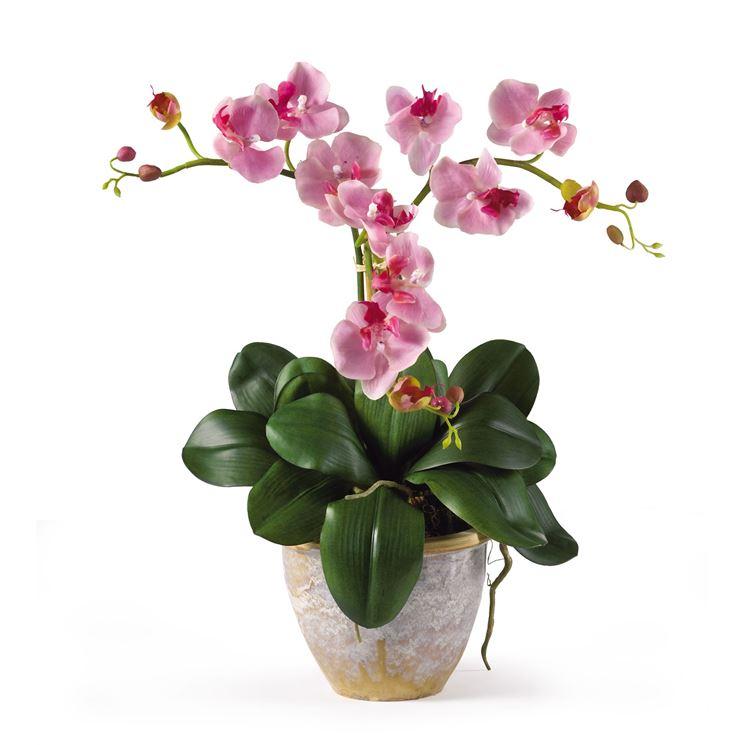 marche appartamenti orchidee agriturismo valle del metauro
